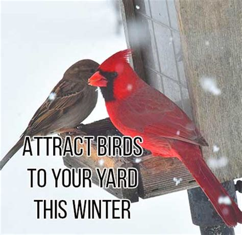 attract birds to your yard this winter shorter s