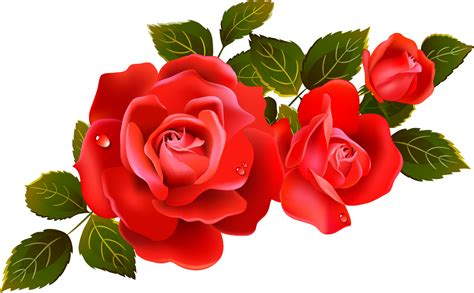 Large Red Roses Clipart Element   Gallery Yopriceville