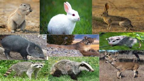 imagenes de animales de zacatecas expo sobre fresnillo