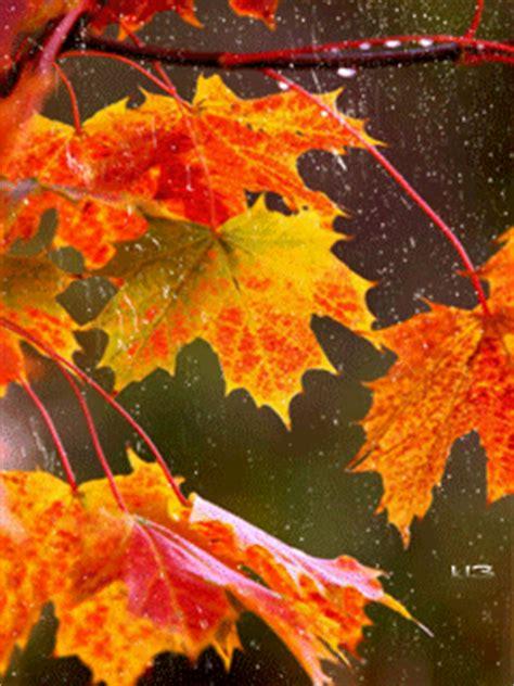 fallen leaves film automne pluie image animated gif