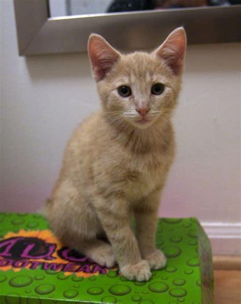 lost rescue lost and cat rescue foundation nonprofit in arlington va volunteer read