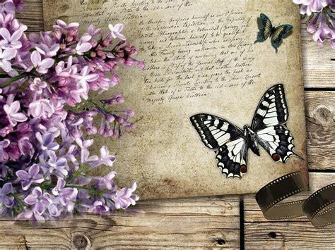 imagenes de mariposas bonitas y fondos de pantalla de lilas mariposa fondos de pantalla gratis
