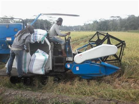 Mesin Panen petani lung timur panen satu hektar hanya butuh tiga