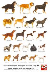 types of dogs choosing painless plans of dogs breeds