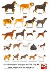 Dog hand knitted breeds poster animal bedding dog breeds pictures dog