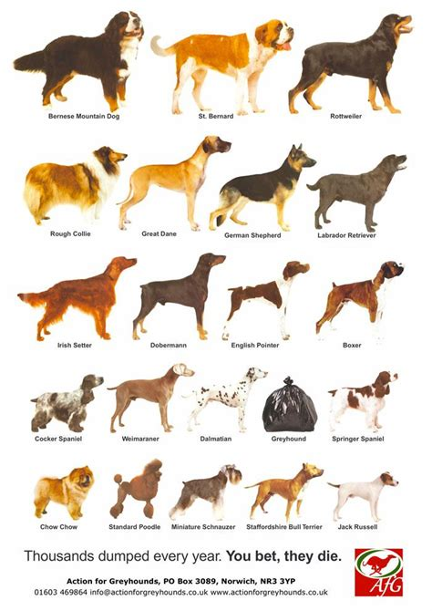 dogs types breeds and dogs on