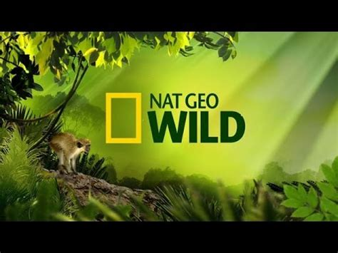nat geo wild nighttime world patagonian mountains