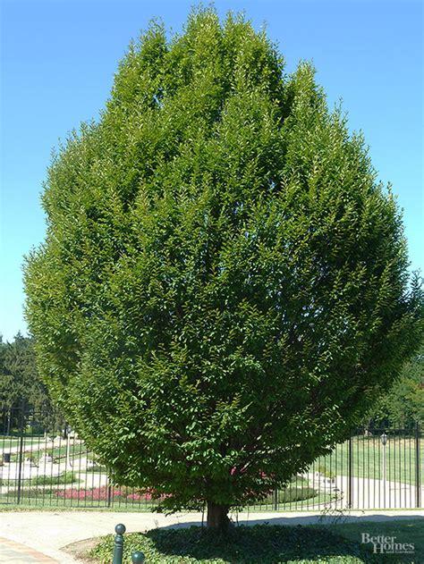 la lnbp contesta tambi 233 arboles de sombra para jardin myideasbedroom