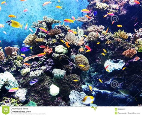 beautify worldwide under the sea stock image image of beauty coral