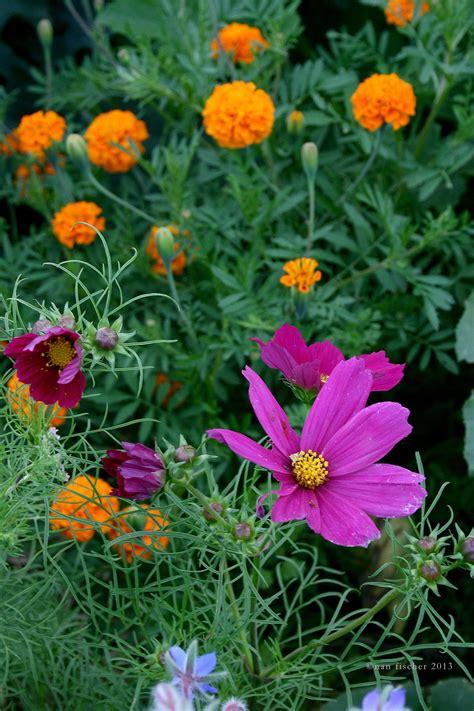 gardening flowers for beginners 100 gardening flowers for beginners how to garden