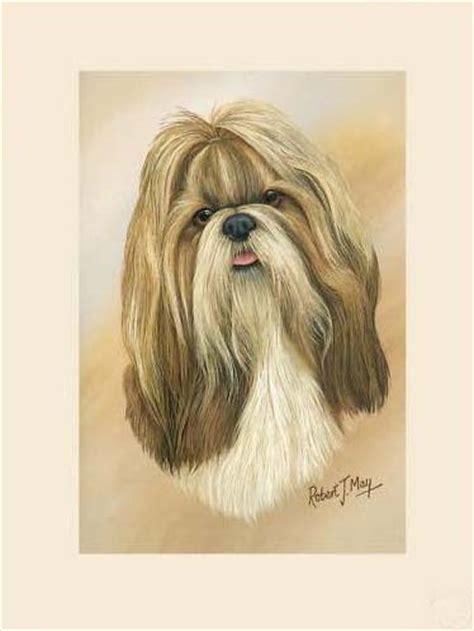 shih tzu puppies price range original shih tzu painting