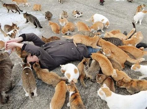 japan s aoshima island cats outnumber humans six to one cats in aoshima island outnumber humans six to one cat