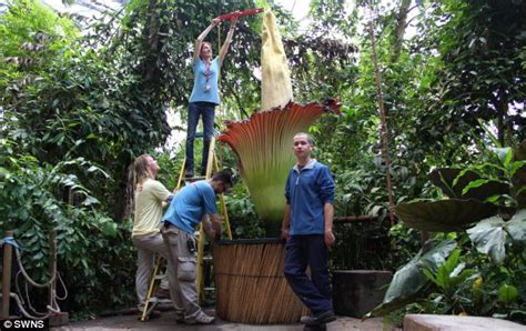 biggest online plants store world s smelliest corpse flower blooms for two days
