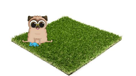 best grass for dogs why we install the best artificial turf for dogs top turf