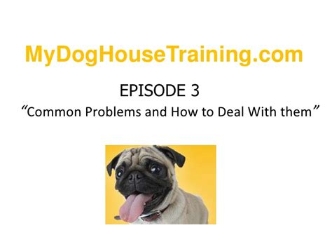 dog house training problems problems and solutions for dog house training