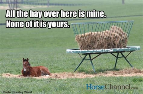 Valentine Day Quote by Horse Memes