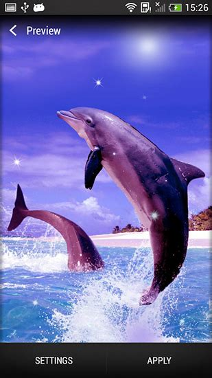 dolphin  wallpaper  android dolphin