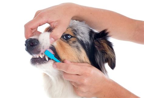 how early can you bathe a puppy bathing ear teeth and nail care breeds net