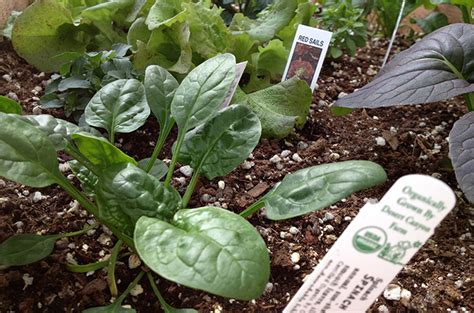 vegetable gardening in colorado yes you can plant veggies perennials and more now in