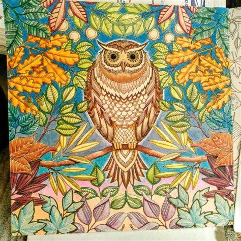 secret garden coloring book owl 145 best images about johanna basford on