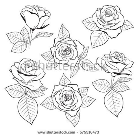 vector set detailed isolated outline rose stock vector