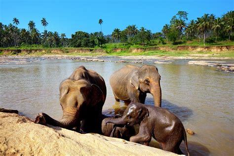 Uwl Mba Sri Lanka by Sri Lanka Wakacje 2018 Wczasy Wycieczki All Inclusive