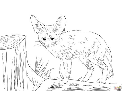 coloring pages fennec fox north african fennec fox coloring page free printable