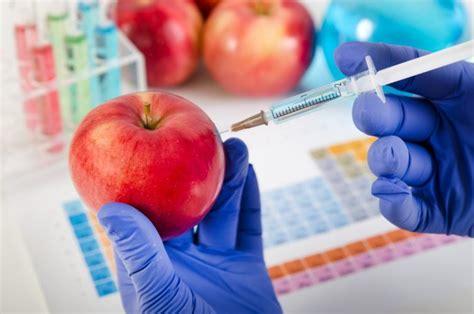 alimentos transgenicos 191 qu 233 son los alimentos transg 233 nicos cocinadelirante
