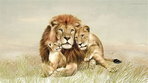imagenes abstractas de leones wallpapers hd leones im 225 genes taringa
