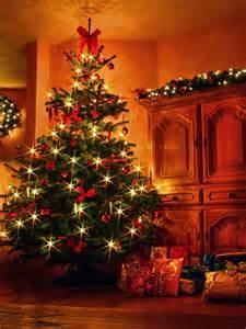 weihnachtsbaum 2009 bild foto von patrick funk aus