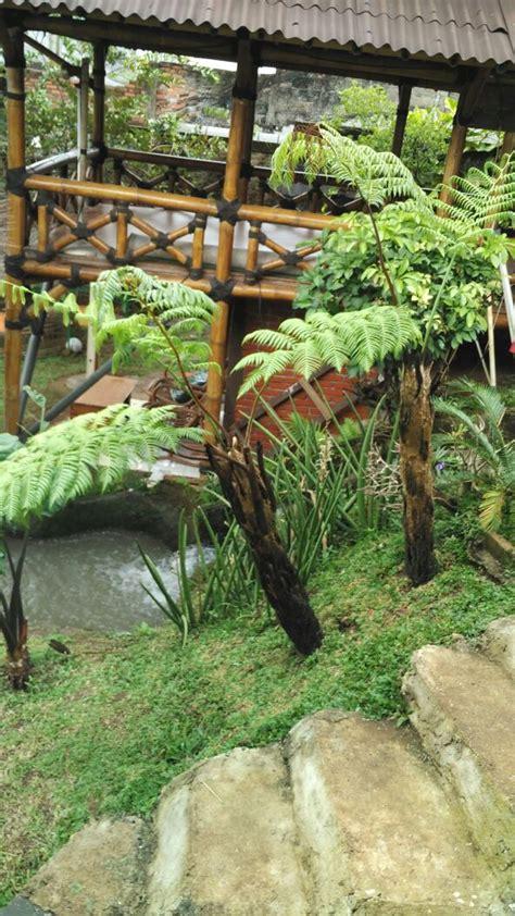 tukang taman murah jual pohon pakis monyet harga  murah gambar tanaman pakis hutan