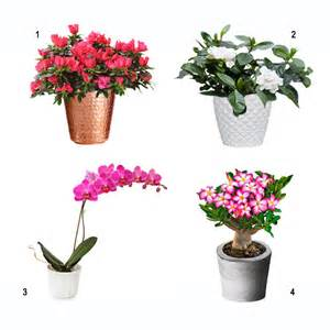best flowering house plants arts