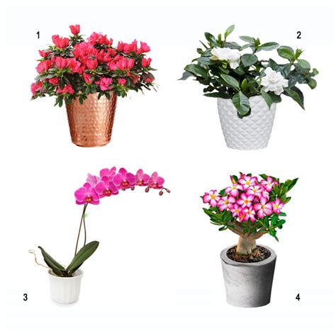 best indoor flowering plants indoor white flowering plants