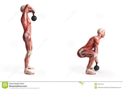 kettlebell swing works what muscles kettlebell exercise stock illustration image 45575164