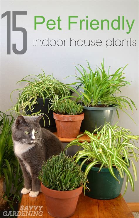 house plants safe for cats and dogs common house plants not poisonous to cats