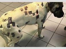 Woman Feels Strange Lumps Under Her Dog's Fur — Then ... Missing Dog