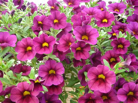 controlling common problems with annuals landscaping gardening ideas