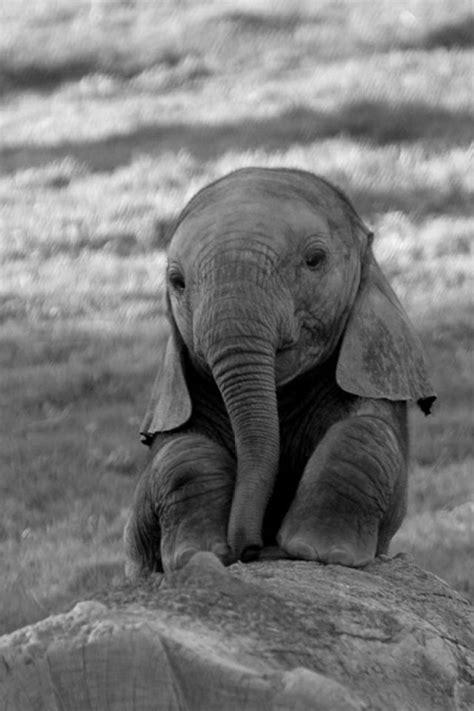 elephant wallpaper pinterest baby elephant iphone wallpaper 640x960px wallpapers