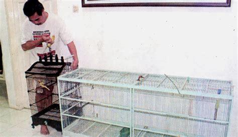Vitamin B Komplek Untuk Burung cara yogi naga hitam merawat kenari di musim hujan klub