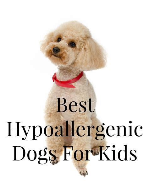 best house dogs for kids non shedding dogs for kids kids matttroy