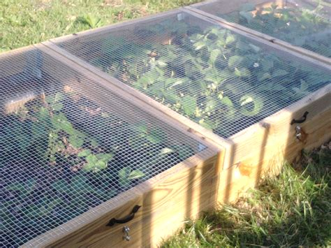 strawberry bed ideas creative system for growing and protecting strawberries