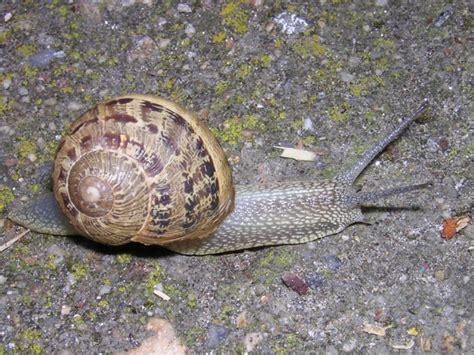 imagenes animales que se arrastran el rinc 243 n de los caracoles