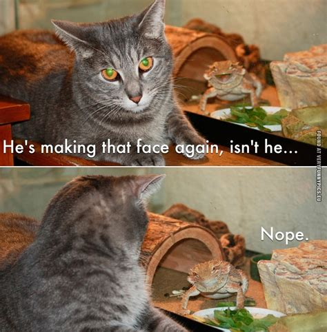 Cat Meme Faces - just making that face very funny pics