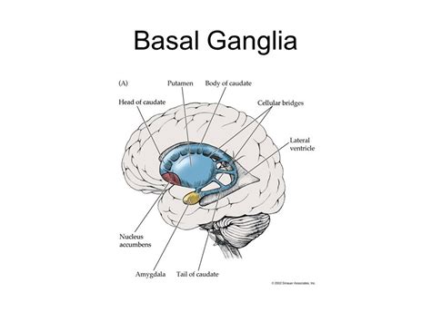 memory location in brain wiring diagram resource free