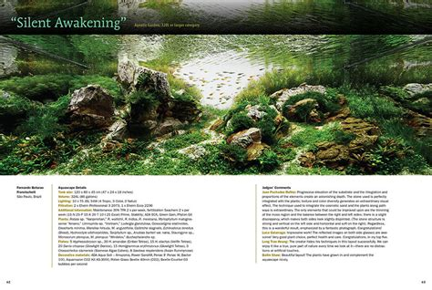 aquascape layout pdf 100 decoration aquascaping bring nature inside