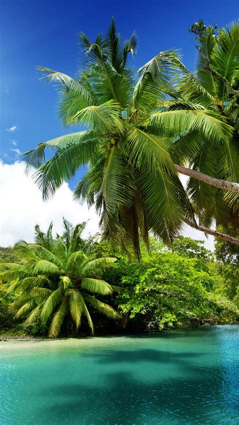 wallpaper ocean   wallpaper palms clouds sun