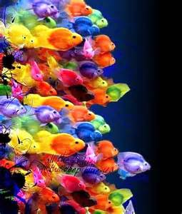 color fish 25 best ideas about colorful fish on