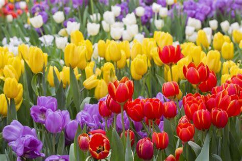 Planter S House by Tulipe Signification Des Fleurs