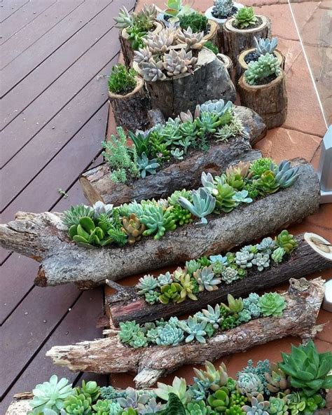 Succulent Planters For Sale by Best 25 Succulent Containers Ideas On Pinterest