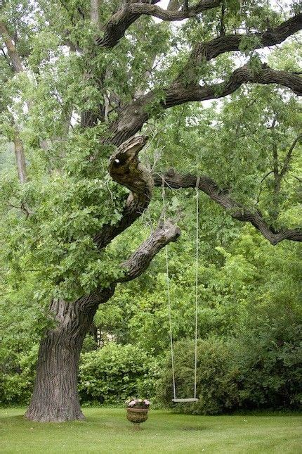 tree with a swing tree swing awesome garden ideas pinterest beautiful